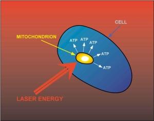 mitochondrier og laser